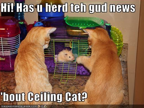 लोल बिल्ली