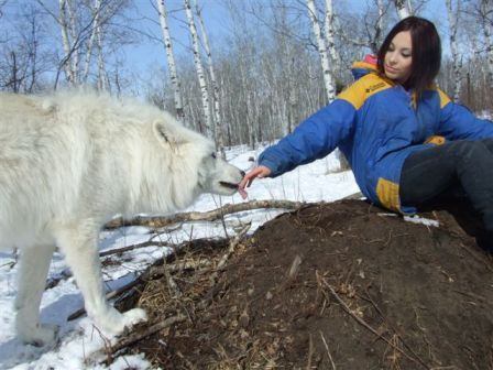 me with a serigala, wolf