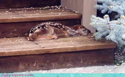 Baby 动物