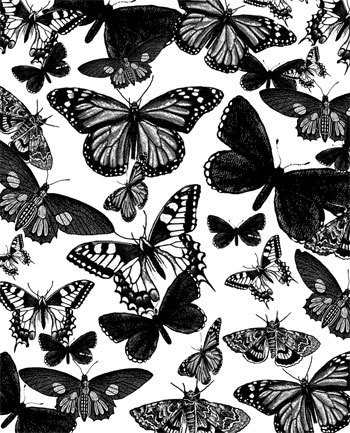 Butterflies Images Wallpaper And Background Photos