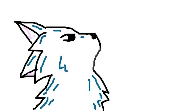Me, Iceshadow of Thunderclan