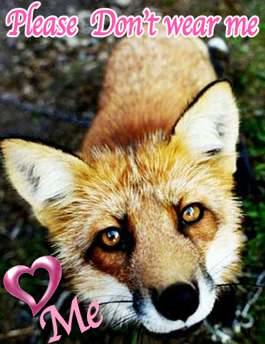Say No to fox fur - animal-rights Photo