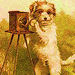 Vintage Dog ! - dogs icon