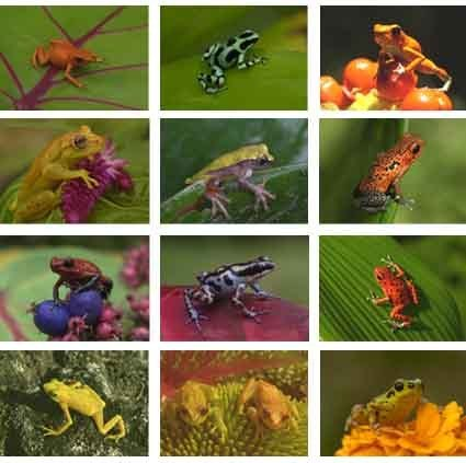 collection of colourful frogs