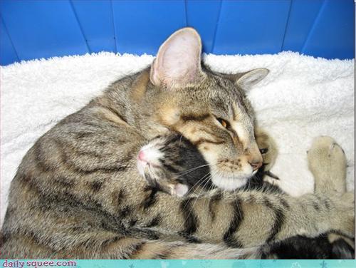Baby জন্তু জানোয়ার