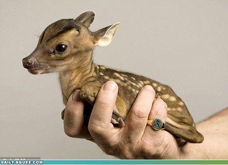 Baby 動物