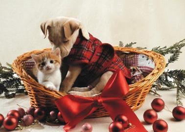 크리스마스 Pets