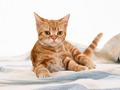 Cute Kitty Wallpaper
