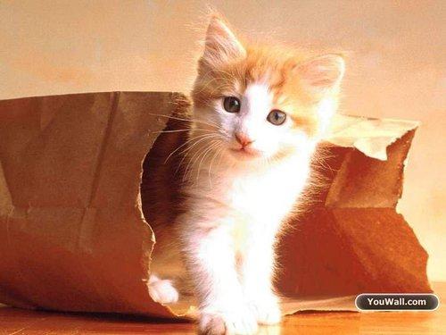 Cats wallpaper titled Cute Kitty Wallpaper