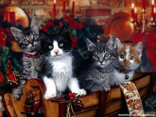 Cute Kitty fond d'écran