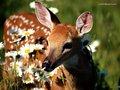 Deer in flowers