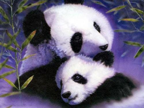 Pandas wallpaper called Panda and cub