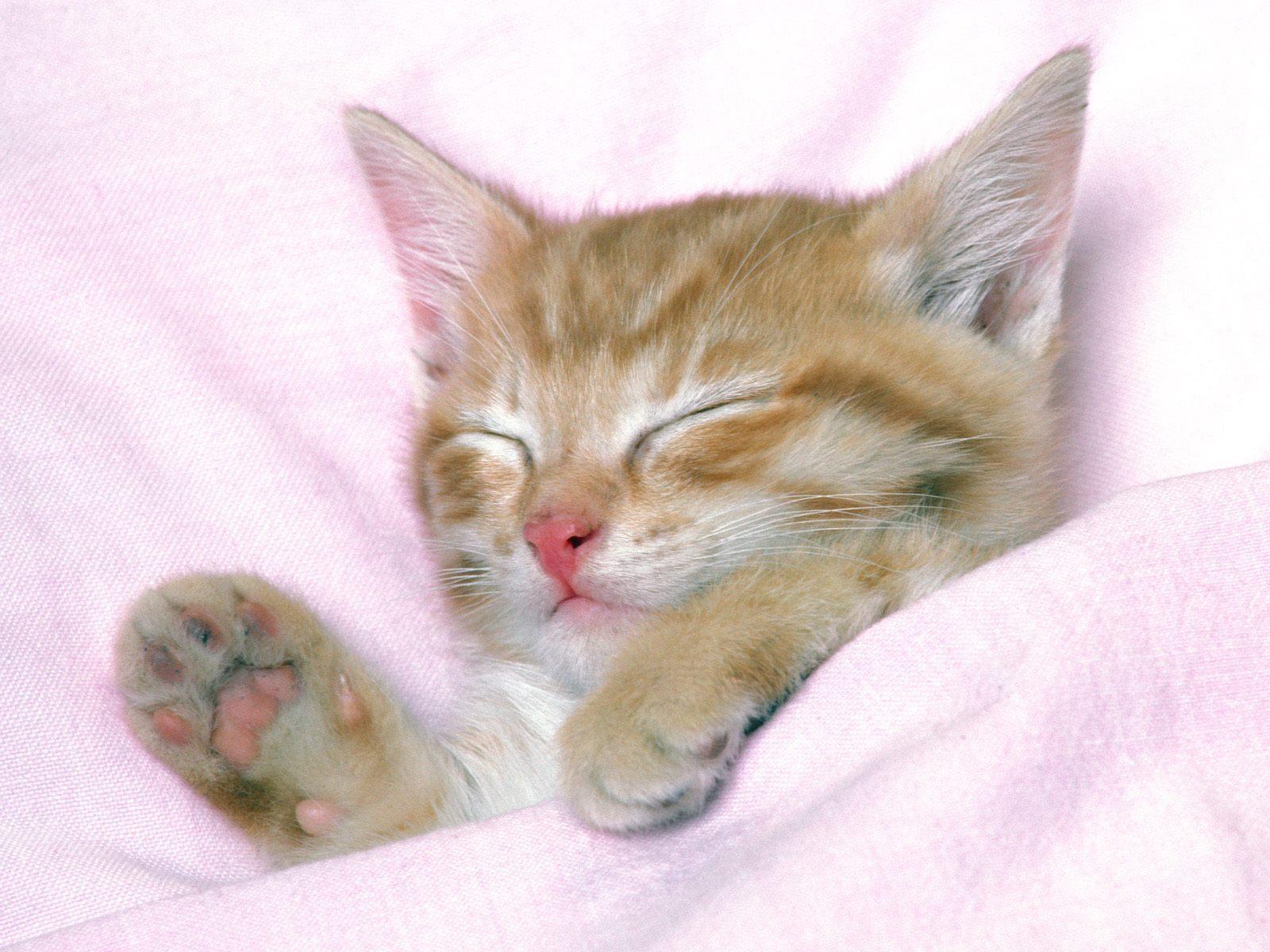 Pretty Kitty Wallpaper  Cats 10547159 Fanpop