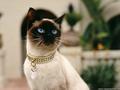 Pretty Kitty Wallpaper
