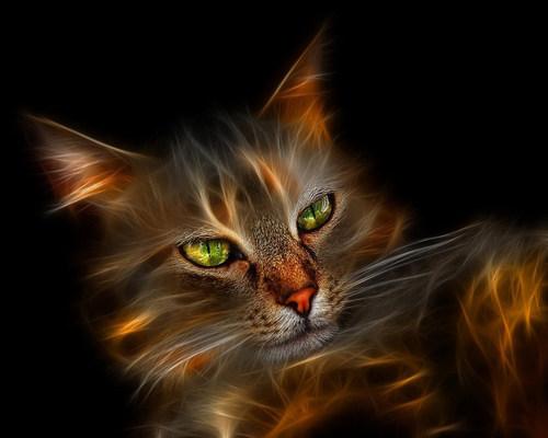 Pretty Kitty پیپر وال