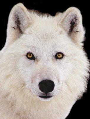 White mga lobo