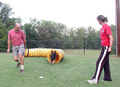 german shepherd agility - dog-agility photo