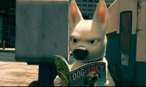Bolt Reading Dog Fancy