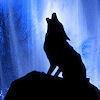 Fantasy photo entitled Lone Wolf