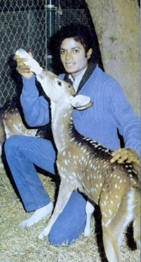 MJ Bottle-Feeding Deer In His Socks!!!! -  michael-jackson photo