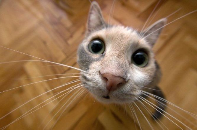 Cute kittens aren t they cute