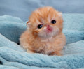 aren't they cute? - cute-kittens photo