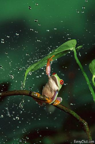 nature's umbrella :)
