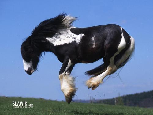 Kuda kertas dinding titled Black paint bucking