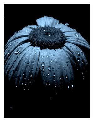 Flower:)