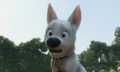 Haha Never mind Dog Face... - disneys-bolt photo