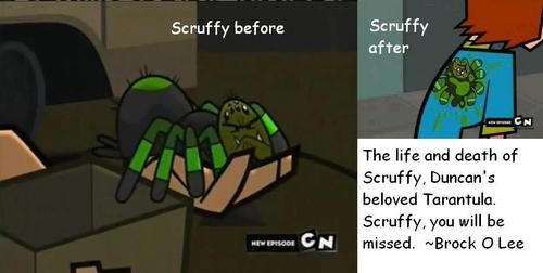 Life and Death of Scruffy