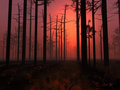 Red Sunset in a forest - future-authors photo
