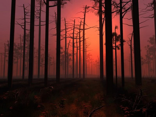 Red Sunset in a forest