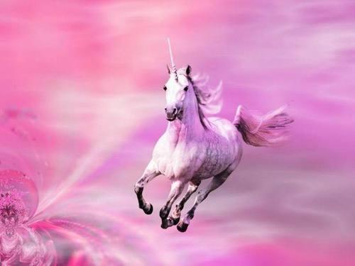 berwarna merah muda, merah muda Shimmers