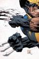 Wolverine - wolverine photo