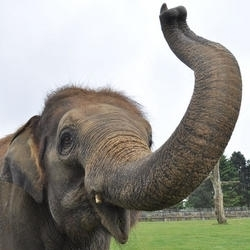 my elefante karishma!!!!!!!
