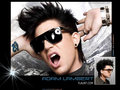 Adam Wallpaper - adam-lambert wallpaper