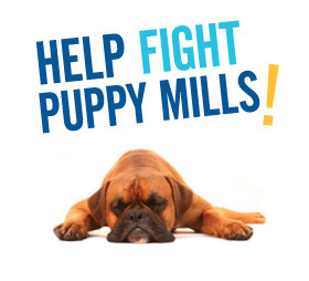 banning puppy mills Bills that would ban pet stores from purchasing dogs from puppy mills was approved by the house agriculture committee and moves forward to the house of representatives.