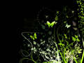 Butterflies At Night - butterflies wallpaper