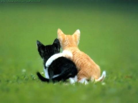 Hugs to آپ :)