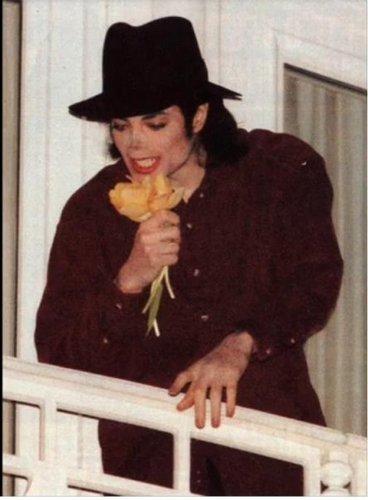 MJ Цветы