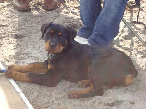 My Puppy!!!<3