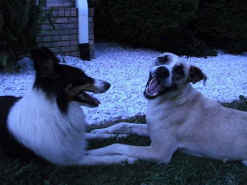 Oreo & Reggie