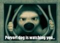Pervert Dog