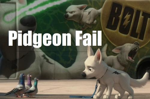 Pidgeon Fail