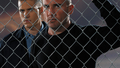 Prison Break HQ  Wallpaper - prison-break wallpaper