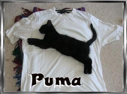 Puma!