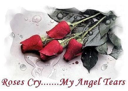 rosas Cry My angel Tears