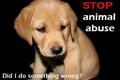 Stop animal abuse!!! - animal-rights photo