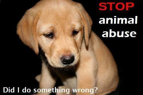 Animal Rights wallpaper titled Stop animal abuse!!!